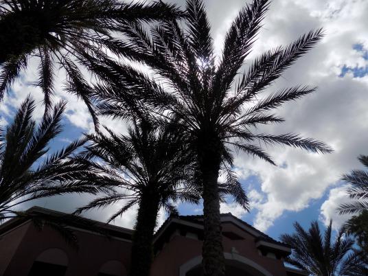palm-tree-1049994_1920